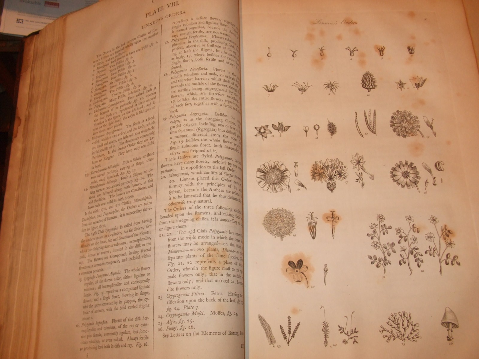Image for The Gardener's and Botanist's Dictionary Containing the Best and Newest Methods of Cultivating and Improving the Kitchen, Fruit, and Flower Garden, and Nursery of Performing  the Practical Parts of Agriculture of Managing Vineyards ( 4 Volumes )