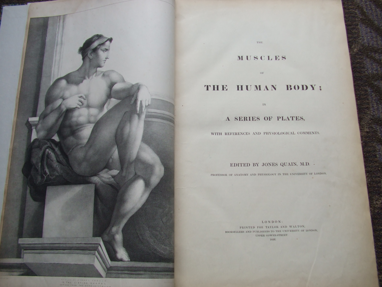 Image for The Muscles of the Human Body; in a series of plates, with references and physiological comments.